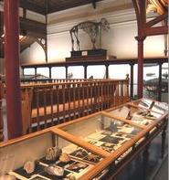 animal attic - museum
